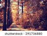 autumn park landscape with... | Shutterstock . vector #291736880