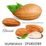 almonds  kernels and leaves.... | Shutterstock .eps vector #291802589