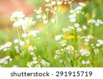 soft focus blurred  close up of ... | Shutterstock . vector #291915719
