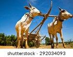 Labor Bulls Cambodia....