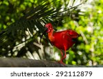 scarlet ibis | Shutterstock . vector #292112879