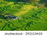 rice fields on terraced in... | Shutterstock . vector #292113410
