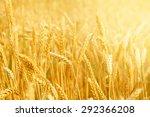 wheat field | Shutterstock . vector #292366208
