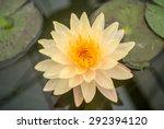 Blossom Orange Lotus  Violet...