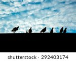 Silhouette Of Pigeons On The...