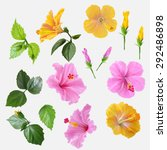Set Flowers Hibiscus Yellow An...