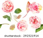 vintage style watercolour rose... | Shutterstock . vector #292521914