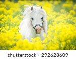 White Shetland Pony On The...
