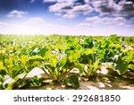 summer landscape. agricultural... | Shutterstock . vector #292681850
