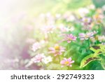 beautiful flowers with soft... | Shutterstock . vector #292749323