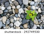 Top View Of Plant Growth From...