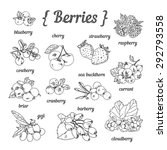 hand sketched berries ... | Shutterstock .eps vector #292793558
