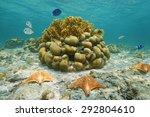 Underwater Marine Life On A...