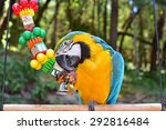 Blue And Gold Macaw Playing...