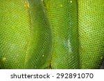 Close Up Green Tree Python Skin