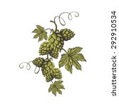 Hops Vector Visual Graphic Ico...