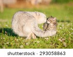 Stock photo little funny kitten is afraid of big adult cat 293058863