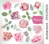 big watercolor roses and leaves ... | Shutterstock .eps vector #293129624
