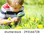 young boy exploring nature in a ... | Shutterstock . vector #293166728