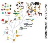 evolution in biology  scheme... | Shutterstock .eps vector #293178890