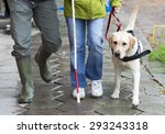 a blind person is led by her... | Shutterstock . vector #293243318