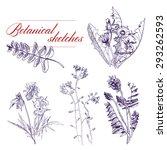 vector a monochrome botanical... | Shutterstock .eps vector #293262593