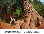 Small photo of Man stands near big tree in Redwood California