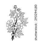 sweet briar | Shutterstock .eps vector #293294180