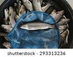 Trout Fish Farm