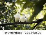 white pairs birds perched on... | Shutterstock . vector #293343608