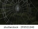 spider web in the forest | Shutterstock . vector #293521340