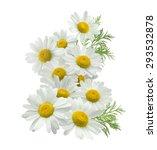 Chamomile Flower Vertical Grou...