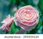 Soft Blurred Romantic Antique...