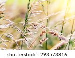 Nature Background With Wild...