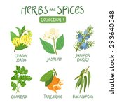 herbs and spices collection 1.... | Shutterstock .eps vector #293640548