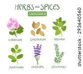 herbs and spices collection 8.... | Shutterstock .eps vector #293640560