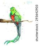 watercolor green quetzal bird... | Shutterstock .eps vector #293642903