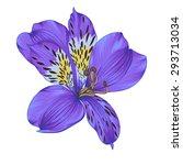 beautiful bright violet...