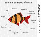 external structure of the fish... | Shutterstock .eps vector #293728586