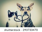 Stock photo dog and a cat and a stethoscope 293733470