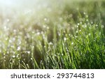 fresh green grass with dew | Shutterstock . vector #293744813