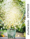 bucket with daisies flowers on... | Shutterstock . vector #293750210