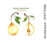 watercolor vector pears | Shutterstock .eps vector #293771480