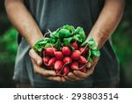 organic vegetables. farmers... | Shutterstock . vector #293803514