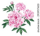 garden peony. watercolor  hand...   Shutterstock .eps vector #293957603