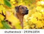Beautiful Dog Among Yellow...