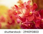beautiful purple orchid flower... | Shutterstock . vector #294093803