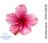 vector watercolor hand drawn... | Shutterstock .eps vector #294119018