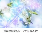 Photo of beautiful white tree blossom, abstract natural background, fine art, spring time season, cherry blooming in sunny day, floral wallpaper, soft focus, little pink flowers on tree branch.