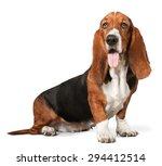 Dog  Basset Hound  Puppy.